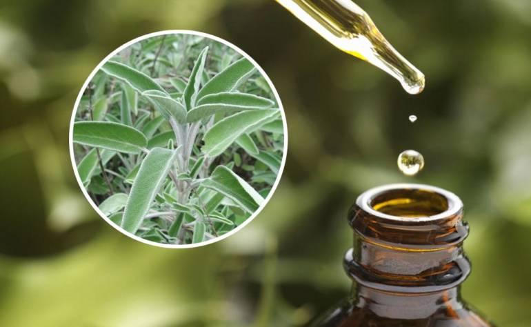 Salvia – Uleiul esențial de salvie – Secretul frumuseții